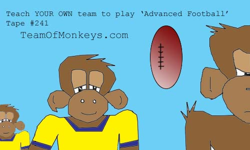 football monkeys